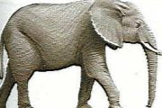 Bombay Milan elefante hembra