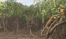 Manglar de la Isla de Borneo - visitas guiadas